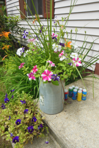 Petunias in the watering can